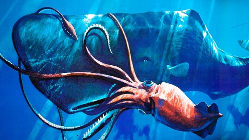 giant squid whale sharks sizes tend to be exaggerated world